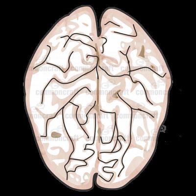Brain Top