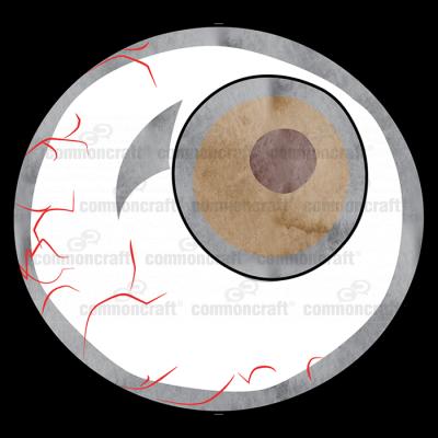 Eyeball Capillaries