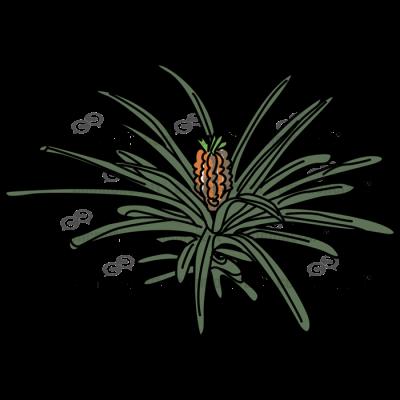 Pineapple Plant Full