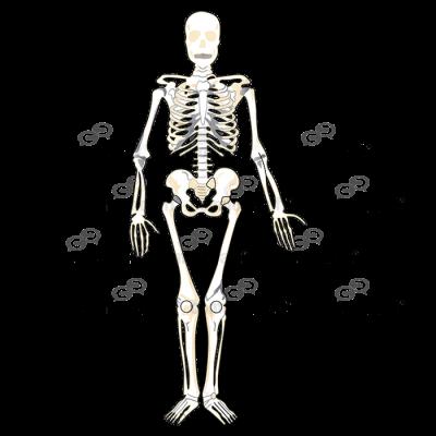 Skeleton Full