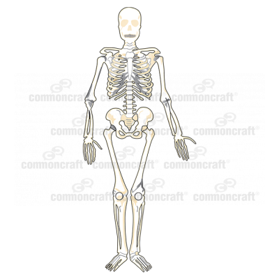 Skeleton Full
