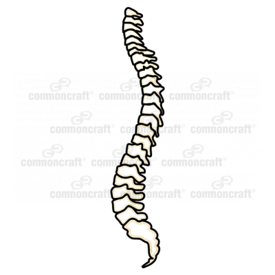 Skeleton Spine