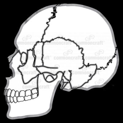 Skull Side Joints