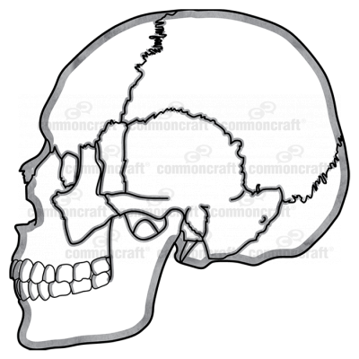 Skull Side Joints