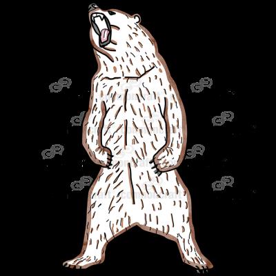 Bear Standing Roar