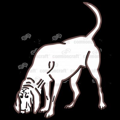 Bloodhound Sniffing