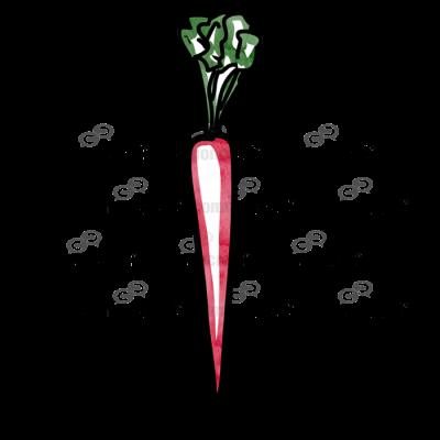 Carrot Single